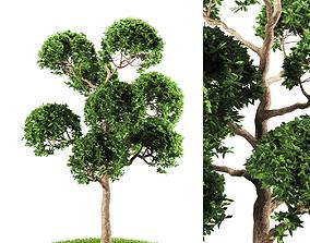 3D tree 119-2