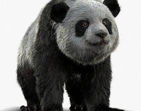 Giant Panda RIGGED 3D model