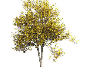 Ash-tree 2 3D