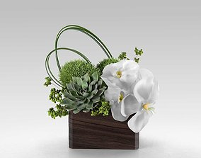 square 3D Phalaenopsis Orchid And Succulents in Box