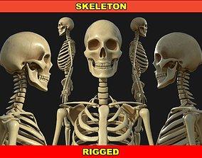 3D model VR / AR ready Rigged Human Skeleton