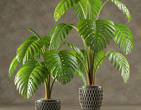 Plant 001 Monstera 3D