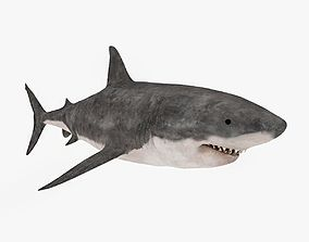 3D model Great White Shark - Low Poly