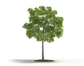 outdoor Green Leafed Tree 3D model