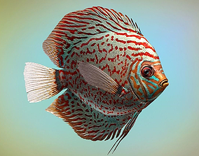 3D model Fish Symphysodon discus
