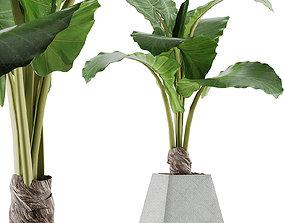 3D model Plants Collection 48