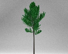 Cherry Sapling 3D asset