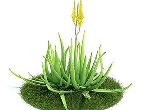 3D Aloe Vera Greenish Ayurvedic Aloe Vera