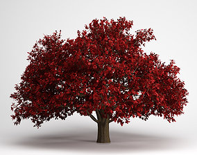 CGAxis Persian Ironwood Tree 11 3D