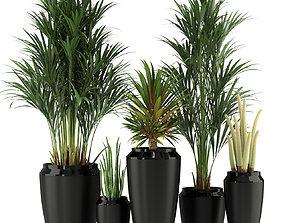 Plants collection 339 3D