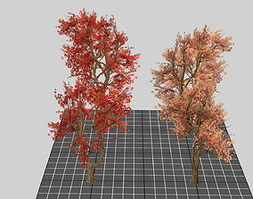 3D Red Maple Trees