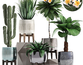 3D Collection of Exotic plants