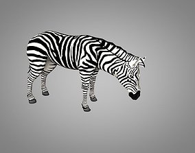 3D asset animated Zebra