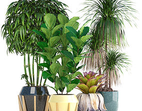 3D Collection of tropical plants bush