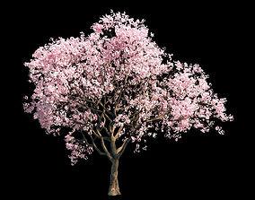 3D Sakura 6