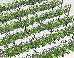 Vineyard 3D model low-poly