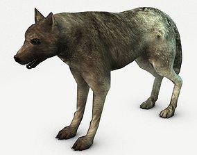 3D asset Wolf