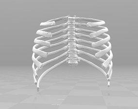 3D Female T3-T10 ribcage