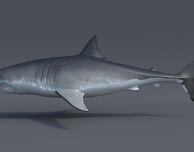 Great white shark - Carcharodon carcharias 3D model