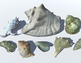 3D model Seashells Pack