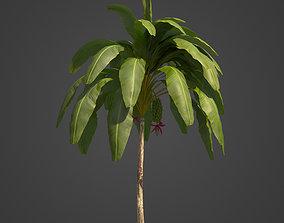 2021 PBR Banana Collection - Musa Paradisiaca 3D model