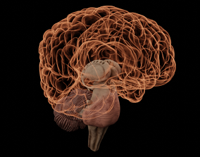 High Resolution 8k Human Brain System Pack 3D model