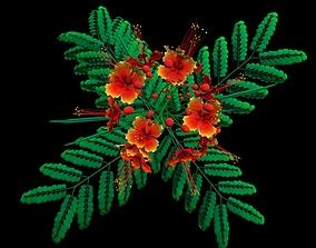 3D model Flower Barbados