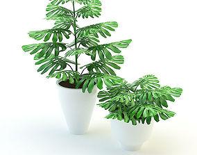 3D asset Plants Monstera