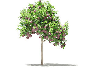 3D model Common Fig Tree with Fruits carica