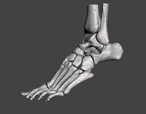 Left Foot - male 3D model