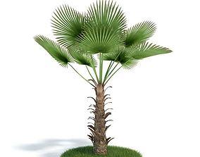 Green Tropic Palm 3D model