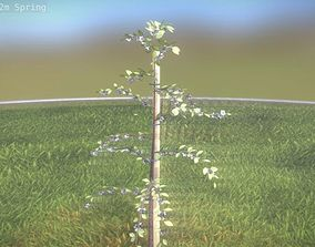 A small plum tree 2m in the spring season 3D asset