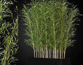 Plants collection 271 3D