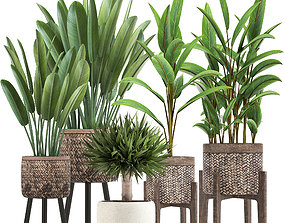 3D Collection of Exotic Plants palm
