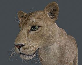 LION-013 3D model