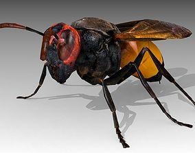 Hornet 3D asset