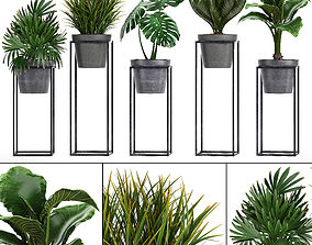 3D model Collection Exotic plants