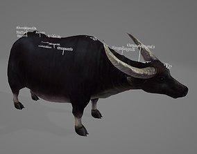 3D model Buffalo Organ