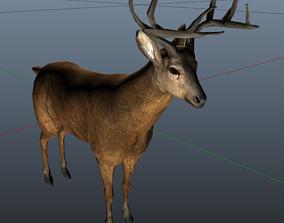 Deer Model 3D asset