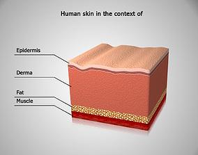 3D Human skin in the cut