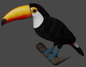 3D asset Toucan Ramphastos Toco