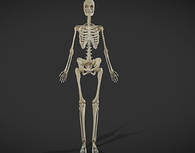 3D model Female Skeletal System Skeleton