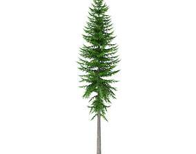 Norway Spruce Picea abies 14m 3D