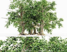 3D model 5 Broadleaf tree collection
