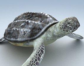 3D asset Leatherback Sea Turtle Dermochelys Coriacea