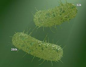 two models of flagellum bacteria 3D