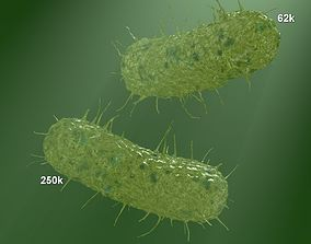 two models of flagellum bacteria 3D