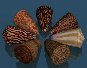 Conus shell low poly 3D asset