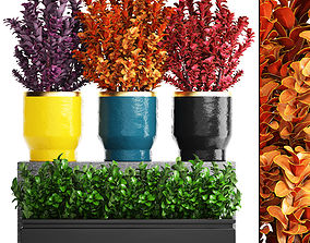 3D Plant in pot berberis