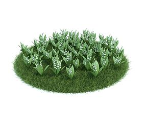 Convallaria Majalis Flowering Plant 3D model